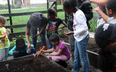 Transplanting to our Garden